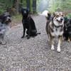 Charlie, Cora, Ebby und Arza