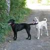 Cora und Spike