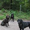 Cora, Finn und Zehra