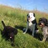 Jessy, Bonny und Charlie