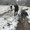 Charlie, Cora und Bonny