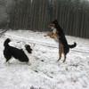 Schneebälle fangen!