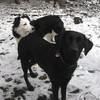 Cora und Bonny