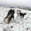 Da Vinci und Bonny flitzen durch den Schnee