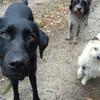 Cora, Luni und Charlie