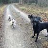 Cora, Charlie, Luni und Kalle