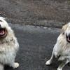 Luzi und Teddy