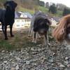 Cora, Charlie und Fido erkunden den provisorischen Garten :-)