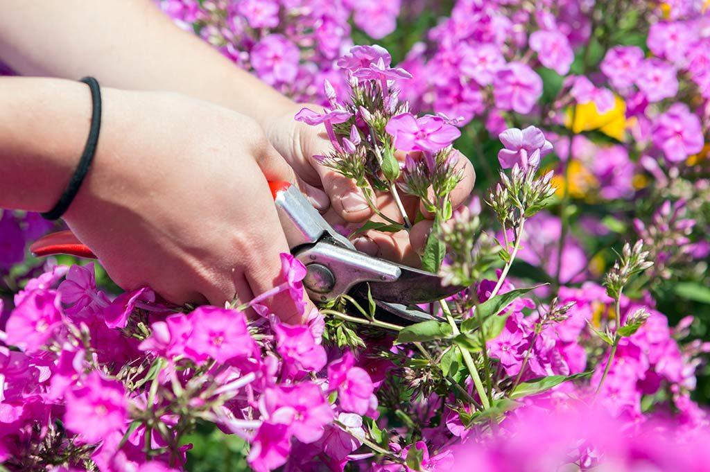 Blumenschneiden