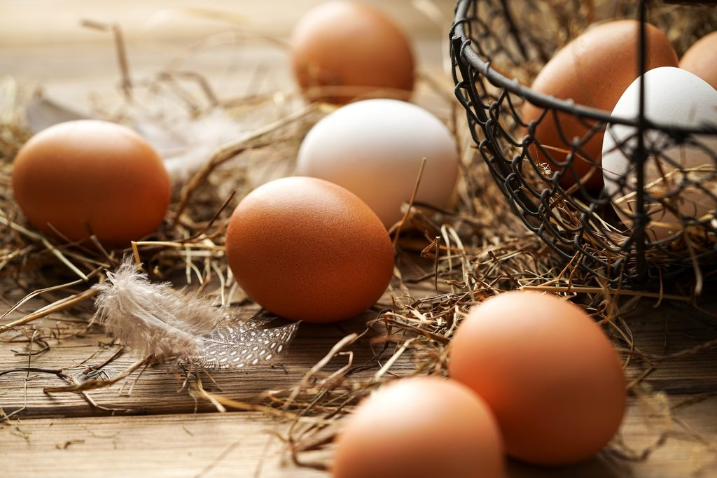 Erntl Eier