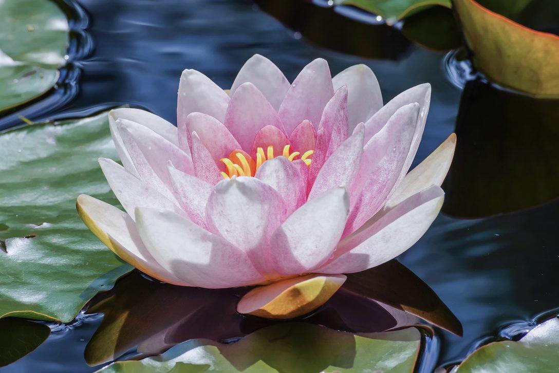 Achtsamkeit & Selbstfürsorge - Lotusblüte