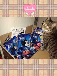 FELIX Crunchy & Soft Testpaket wird freudig von einer meiner Katzen empfangen.