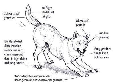 Körpersprache Des Hundes