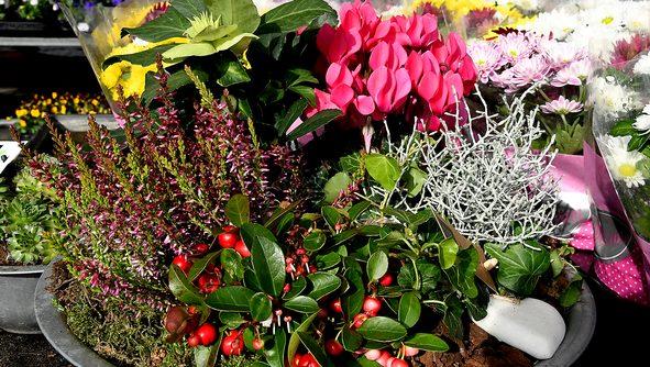 Edeka Helmschrott Blumen und Pflanzen